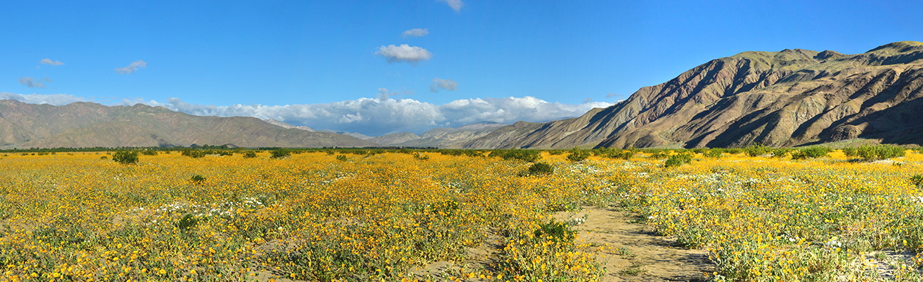 borrego-panorama-6522-6528-18572